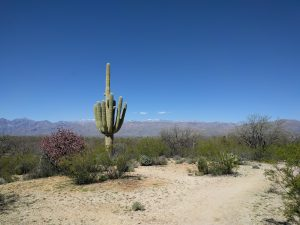 Tucson, Lots of Saguaros and Some Other Stuff