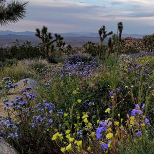 California… Knows How to Party: Amboy Crater, Joshua Tree, and Palm Springs