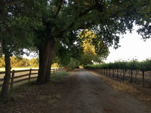 Stuck in Lodi Again, RVing in California's 'Other' Wine Country